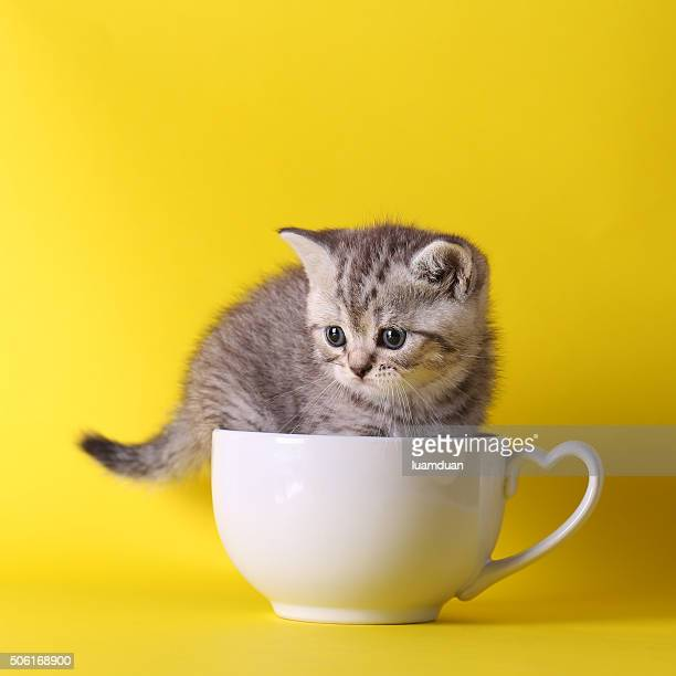 cute kittens sitting inside in pastel containers on yellow background