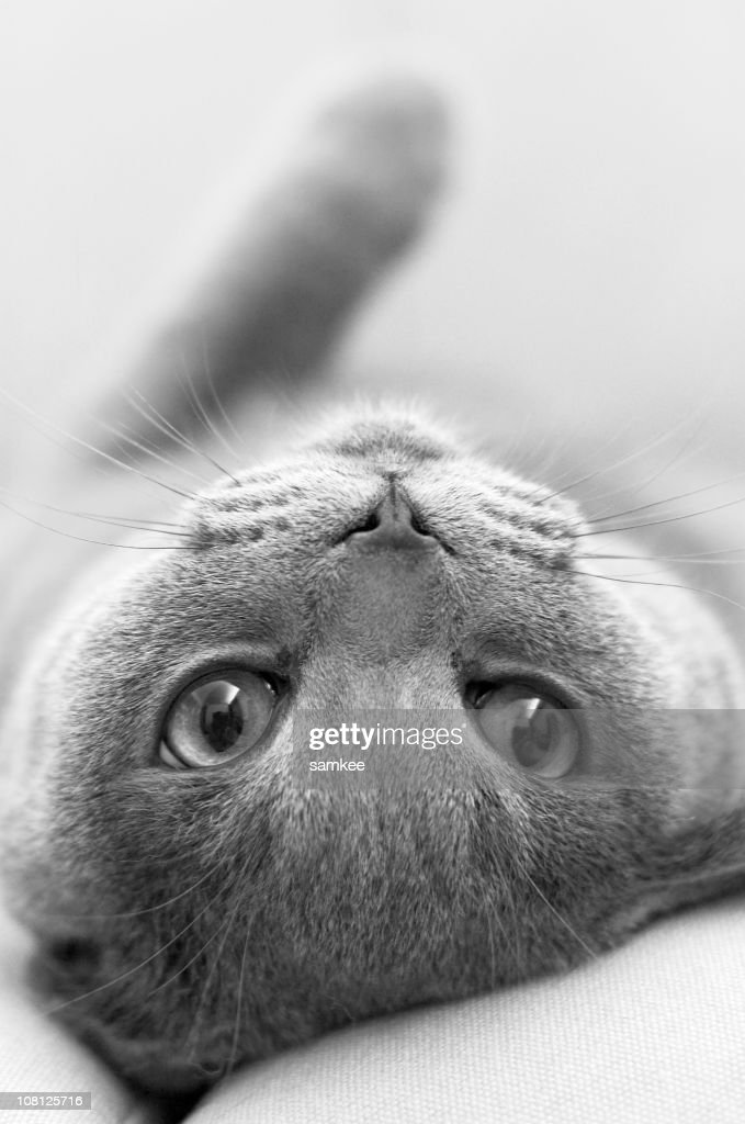 cute kitty, b&w : Stock Photo
