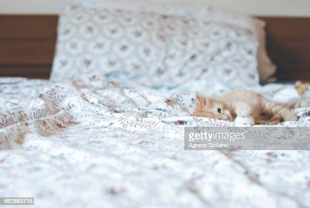 A cute kitty playing on a bed