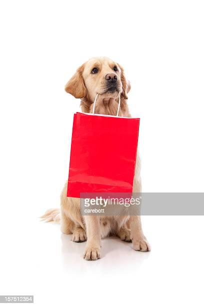 Niedlichen Hund Holding einer Einkaufstasche