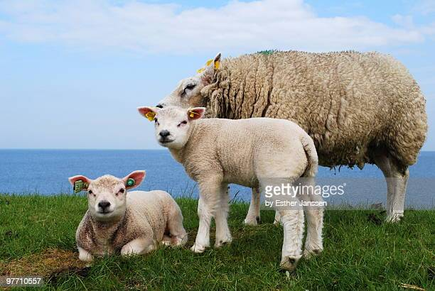 Cute little animal family