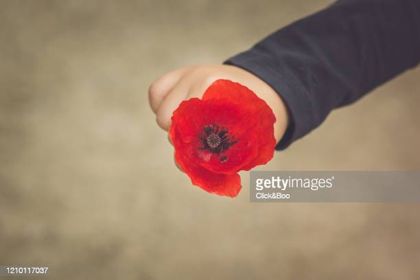 cute little boy hand holding a poppy - click&boo fotografías e imágenes de stock