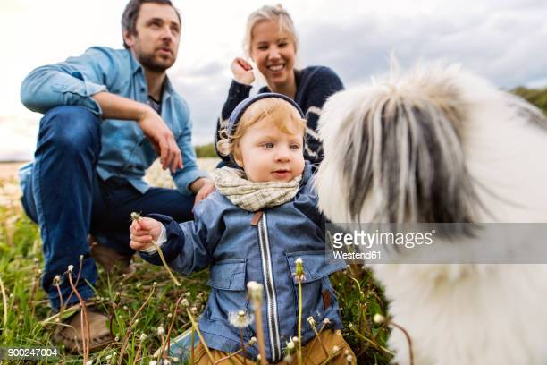 Cute little boy with parents and dog in dandelion field