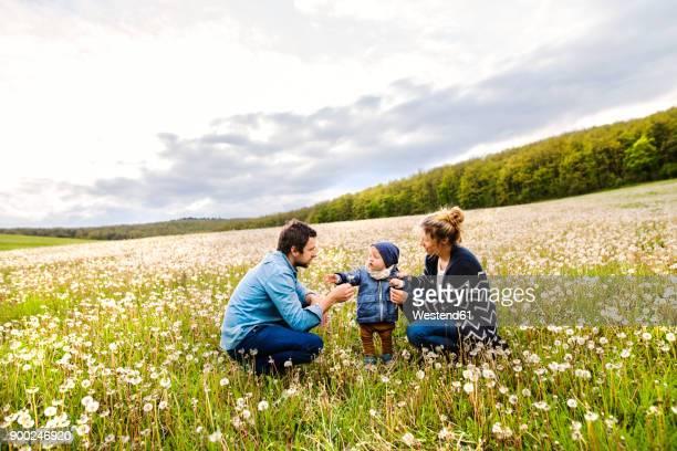 Cute little boy with parents in dandelion field