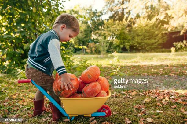 cute little boy with pumpkins in autumn, harvesting and halloween concept - large group of objects stock pictures, royalty-free photos & images