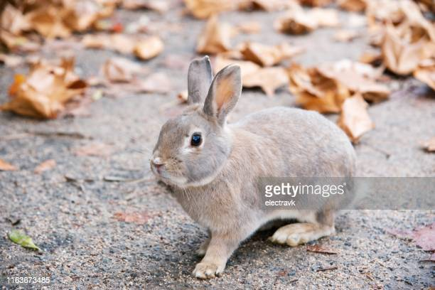 cute little bunny outside - lagomorphs stock pictures, royalty-free photos & images
