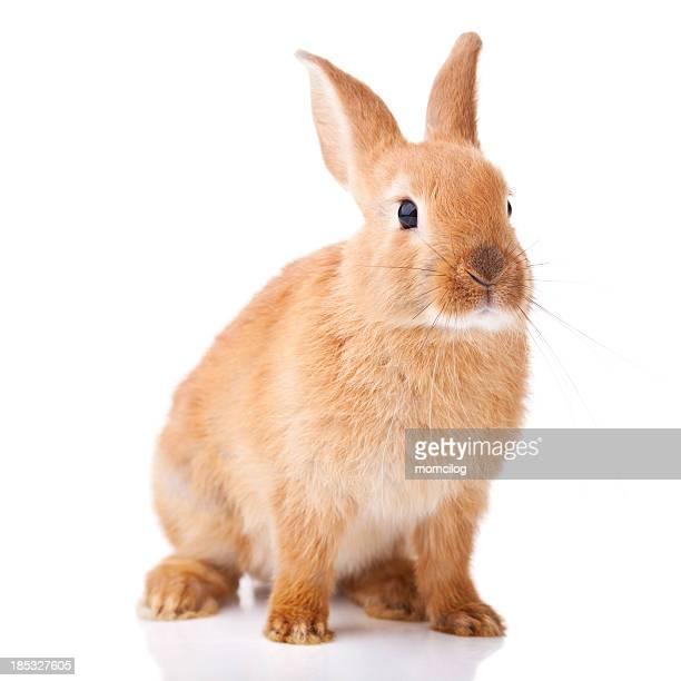 かわいい小さな bunny