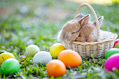 Cute little bunny sleeping in the basket and easter eggs in the meadow