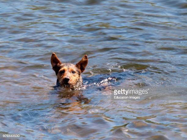 Cute little dog swimming in a lake UK
