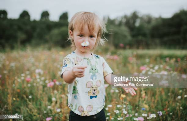 cute little girl among wildflowers - little girls giving head stock photos and pictures