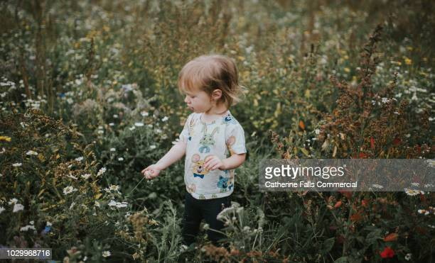 cute little girl among wildflowers - 自生 ストックフォトと画像