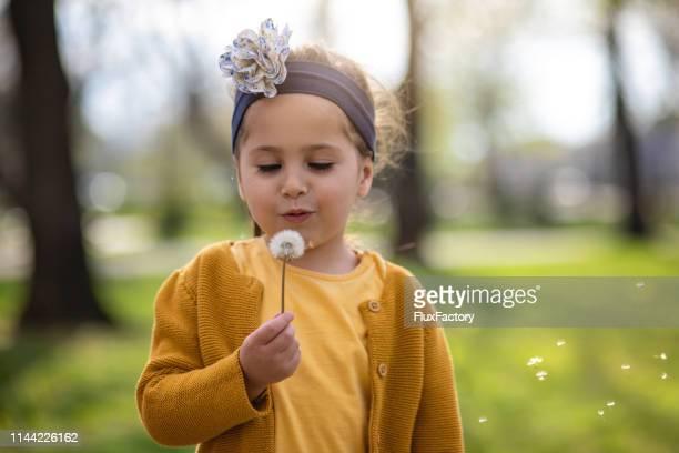 a menina bonito banhada na luz solar que funde sementes do dandelion de uma flor do dente-de-leão - innocence - fotografias e filmes do acervo