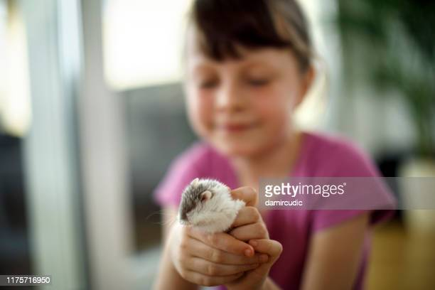 cute little girl having fun with her hamster at home - damircudic stock photos and pictures