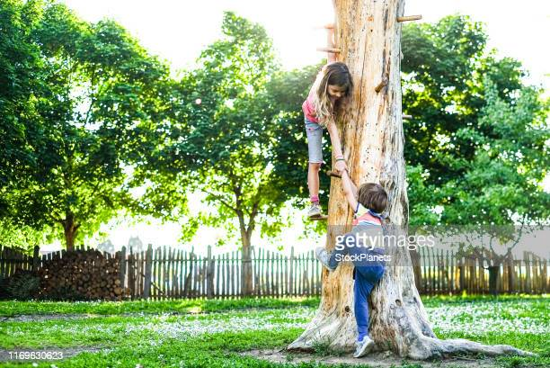 cute little girl helping small boy to climb a tree - climbing stock pictures, royalty-free photos & images
