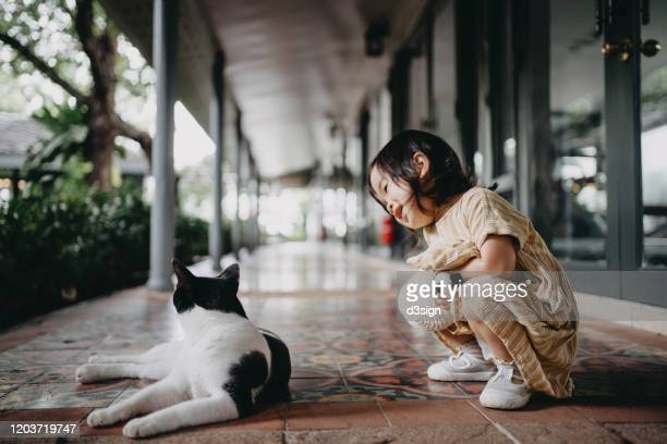 cute little girl holding a straw hat and soft toy having eye contact and playing with the kitten outdoors in the garden - affectionate stock pictures, royalty-free photos & images
