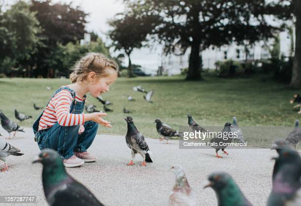 cute little girl in a park talking to an inquistive pigeon - animal stock pictures, royalty-free photos & images