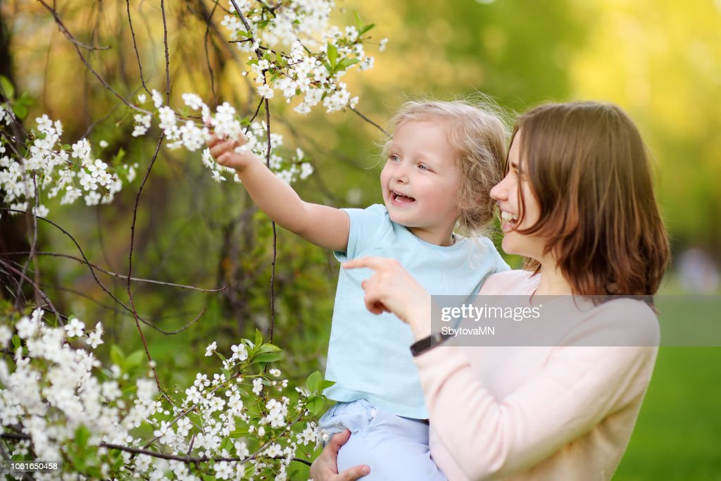 Cute little girl in the arms of her beautiful mother in cherry or apple orchard during flowering. Easter. : Stock Photo