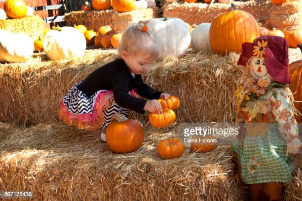 A cute little girl is arranging pumpkins at a pumpkin patch.