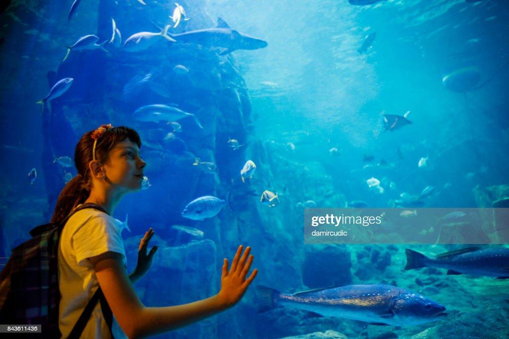 Cute little girl looking at undersea life in a big aquarium : Stock Photo
