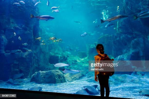 Mignonne petite fille en regardant la vie sous-marine dans un grand aquarium
