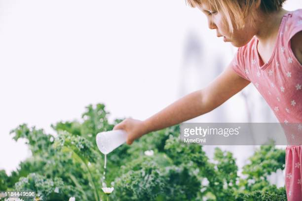 cute little girl watering the garden - mmeemil stock photos and pictures