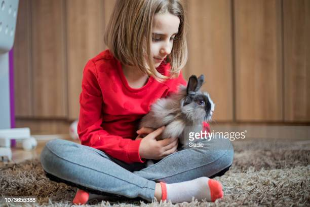 cute little girl with rabbit - hare stock pictures, royalty-free photos & images