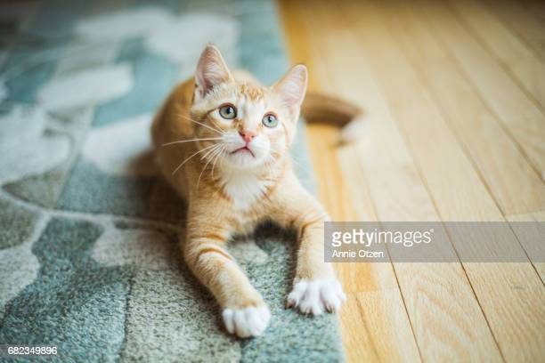 cute little kitten - トラ猫 ストックフォトと画像