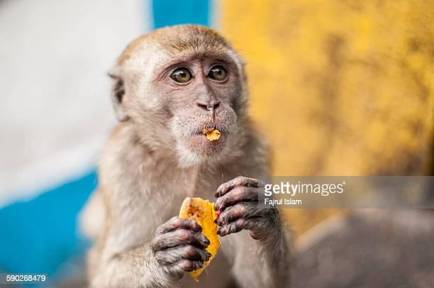 Cute little monkey eating banana