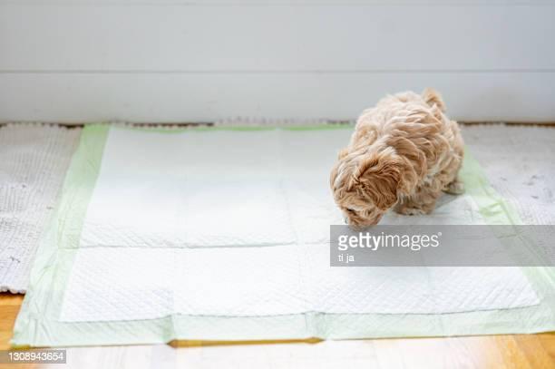 cucciolo carino sul pad igienico per animali domestici - dog pad foto e immagini stock