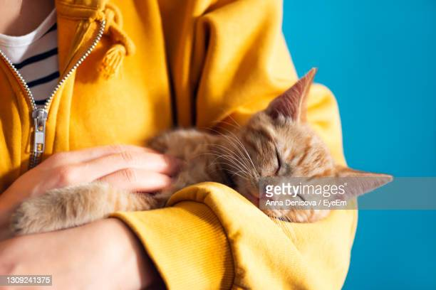 cute little red kitten lays comfrotably on hands of its owner and is sleeping - owner stock pictures, royalty-free photos & images