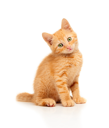 Cute little red kitten sitting and looking straight at camera 489978130