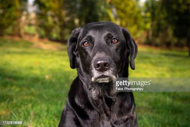 Cute Looking Dog