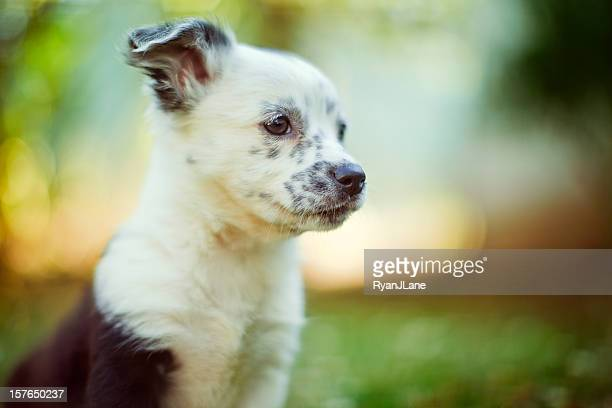 Cute Mixed Breed Puppy