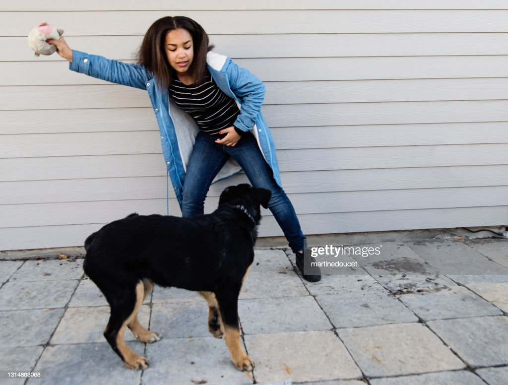 Cute mixed-race preteen girl playing with dog outdoors. : Stock Photo