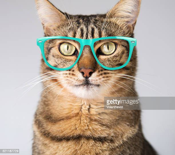 cute modern cat in blue glasses - thick rimmed spectacles - fotografias e filmes do acervo