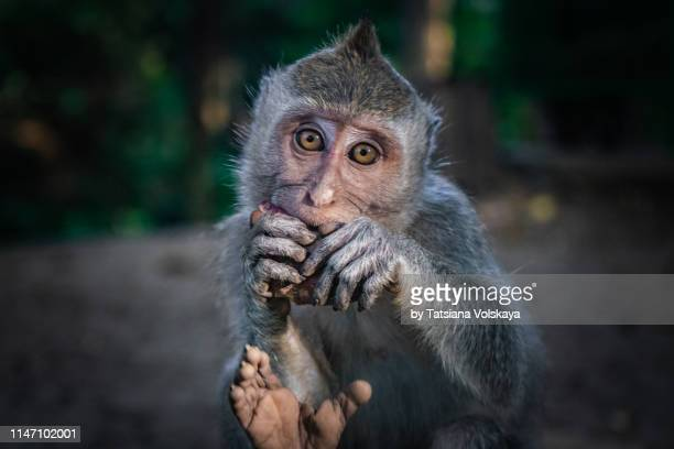 cute monkey looking at camera, hope concept background - compassionate eye stock pictures, royalty-free photos & images