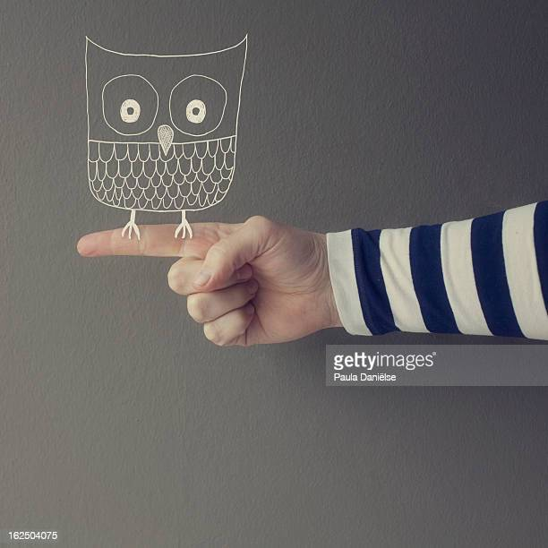 A cute owl