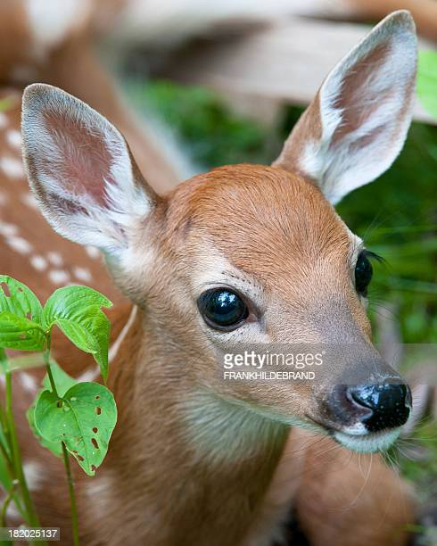 cute - white tail deer stock photos and pictures