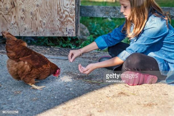 """linda chica preadolescente alimentación pollo cerca de la puerta de granero en la primavera. - """"martine doucet"""" or martinedoucet fotografías e imágenes de stock"""