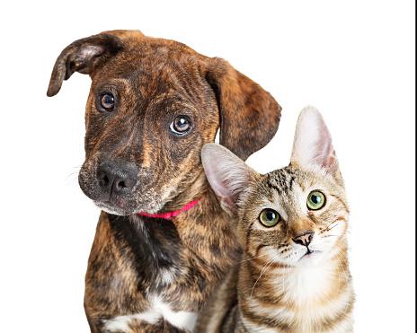 Cute Puppy and Kitten Closeup Looking at Camera 1191962502