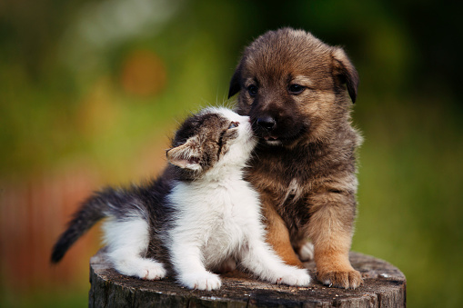 cute puppy and kitten on the grass outdoor; 619961796