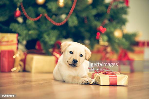 Cute puppy celebrating Christmas