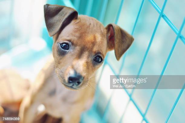 Cute Puppy In Cage