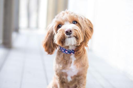 Cute Puppy 598175960