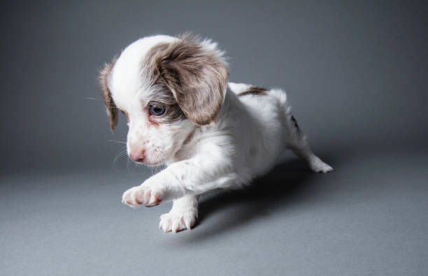 Cute Puppy - The Amanda Collection Wall Art