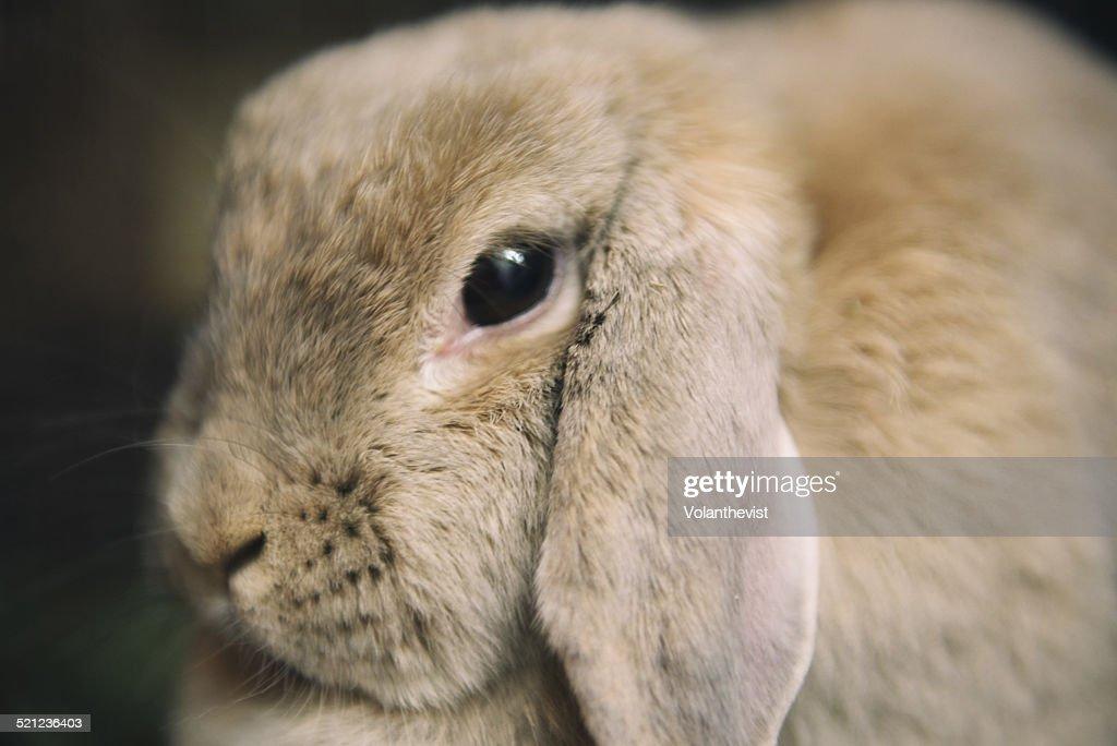 Cute rabbit face close-up : Stock Photo