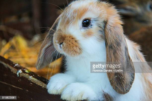 cute rabbit looking away - white rabbit stock pictures, royalty-free photos & images