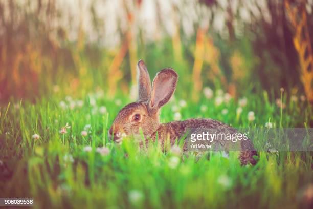 Niedlichen Kaninchen mit großen Ohren im freien