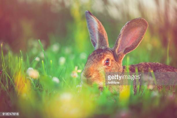 Cute rabbit with big ears outdoors