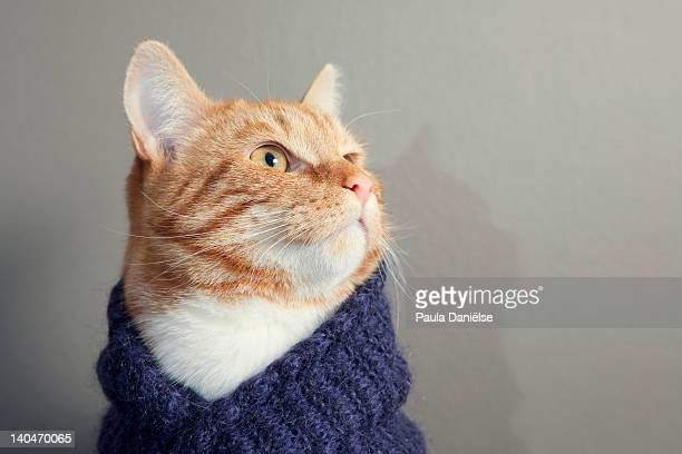 Cute red cat with purple scarf